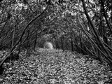A Tunnel Through a Thicket of Rhododendron Shrubs Photographic Print by Amy & Al White & Petteway