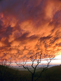 Dramatic Orange Mammatus Clouds at Sunset Photographic Print by Amy & Al White & Petteway