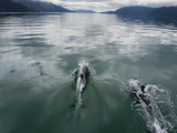 In Eyre Fjord, Peale's Dolphins Lead the Way to the Face of Pio XI Photographic Print by Maria Stenzel