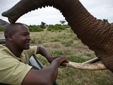 An Elephant Greets Her Keeper a Day After He Removed a Poacher's Arrow From Her Side Photographic Print by Michael Nichols
