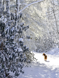 A Pet Dog Walking Up a Snow-Covered Road Photographic Print by Amy & Al White & Petteway