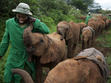 Elephant Orphans Form Intense Bonds With Their Caregivers and Vice Versa Fotografie-Druck von Michael Nichols