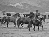 A Cowboy Herding Cattle in Field Fotografisk tryk af Robbie George