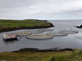 Salmon Farm, Out Skerries, Shetland, Scotland, United Kingdom, Europe Photographic Print by David Lomax