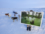 A Print of a South Carolina Swamp Shows How the Arctic Looked 56 Million Years Ago Photographic Print by Ira Block