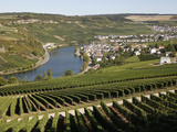 Vineyards and Village of Machtum, Mosel Valley, Luxembourg, Europe Photographic Print by Hans-Peter Merten