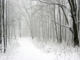 Trees Line a Snow-Covered Road Through a Forest Photographic Print by Amy & Al White & Petteway