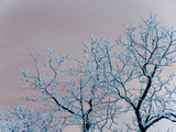 Tree Branches Covered in Rime Ice Photographic Print by Amy & Al White & Petteway