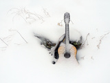 An Old Guitar and a Mandolin Blanketed in Fresh Snow Fotografisk tryk af Amy & Al White & Petteway
