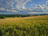 Wheatfield, Warwickshire, England, United Kingdom, Europe Photographic Print by David Hughes