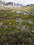 Hardangervidda, Telemark, Norway, Scandinavia, Europe Photographic Print by Hans-Peter Merten
