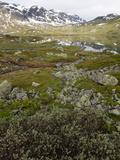 Hardangervidda, Telemark, Norway, Scandinavia, Europe Photographic Print by Hans-Peter Merten