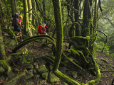 Canyoneers Make Their Way Through a Vine-Choked Rain Forest Photographic Print by Peter Carsten