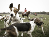 A Hound Jumps over Another Hound with Riders in the Background Photographic Print by Keith Barraclough