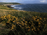 Looking across Croyde Bay from Baggy Point, North Devon, England, United Kingdom, Europe Photographic Print by David Pickford
