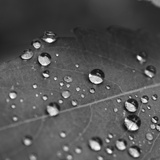 Raindrops on a Leaf Photographic Print by Amy & Al White & Petteway