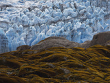 Mosses and Lichens Cover Rock Exposed By Glacier's Retreat Photographic Print by Maria Stenzel
