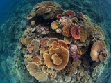 Hard Corals Vie for Space and Energy-Giving Sunlight Off Cairns Lámina fotográfica por David Doubilet