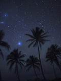 Palm Trees on a Beach Silhouetted Against a Starry Sky Fotografisk tryk af Aaron Huey
