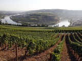 River Mosel and Vineyards Near Grevenmacher, Mosel Valley, Luxembourg, Europe Photographic Print by Hans-Peter Merten