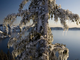 Ice Covered Tree, Creater Lake National Park, Oregon, United States of America, North America Photographic Print by Colin Brynn