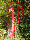 Overgrown Telephone Box, England, United Kingdom, Europe Reprodukcja zdjęcia autor David Hughes