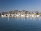 View across the Harbour Port D'Alcudia, Mallorca, Balearic Islands, Spain, Mediterranean, Europe Valokuvavedos tekijänä Ruth Tomlinson