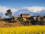Mustard Fields with the Annapurna Range of the Himalayas in the Background, Gandaki, Nepal, Asia Photographic Print by Mark Chivers