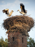Storks on Top of Chimney in Town of Lenzen, Brandenburg, Germany, Photographic Print