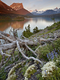 Dusty Star Mountain, St. Mary Lake, and Wildflowers at Dawn, Glacier National Park, Montana, United Photographic Print by James Hager