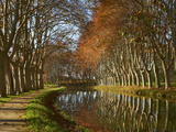 Yellow and Red Leaves in Autumn Along the Canal Du Midi, UNESCO World Heritage Site, Aude, Languedo Photographie par  Tuul