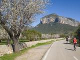 Cyclists on Country Road, Alaro, Mallorca, Balearic Islands, Spain, Europe Fotoprint van Ruth Tomlinson