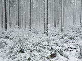 Winter Landscape, Near Villingen-Schwenningen, Black Forest, Baden-Wurttemberg, Germany, Europe Photographic Print by Jochen Schlenker