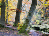 Autumn Trees by the Strid in Strid Wood, Bolton Abbey, Yorkshire, England, United Kingdom, Europe Photographic Print by Mark Sunderland