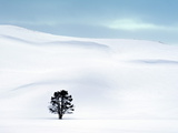 Lone Tree in Hayden Valley, Winter Landscape, Yellowstone National Park, UNESCO World Heritage Site Fotografie-Druck von Kimberly Walker