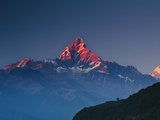 Machapuchare (Machhapuchhre) (Fish Tail) Mountain, in the Annapurna Himal of North Central Nepal, N Photographic Print by Mark Chivers