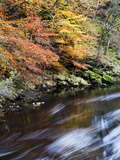 Autumn Colours by the River Wharfe in Strid Wood, Bolton Abbey, Yorkshire, England, United Kingdom, Photographic Print by Mark Sunderland