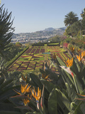 Bird of Paradise Flowers, Botanical Gardens, Funchal, Madeira, Portugal, Atlantic, Europe Photographic Print by James Emmerson