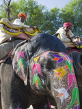 Ceremonial Painted Elephant at Amber Fort Near Jaipur, Rajasthan, India, Asia Photographic Print by Gavin Hellier