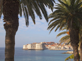 Old Town Through Palm Trees, Dubrovnik, Croatia, Europe Photographic Print by Martin Child
