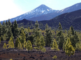 Las Canadas, Parque Nacional Del Teide, UNESCO World Heritage Site, Tenerife, Canary Islands, Spain Photographic Print by Hans-Peter Merten