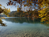Autumn Colours at Alpine Alpsee Lake, Schwangau, Bavaria, Germany, Europe Photographic Print by Richard Nebesky