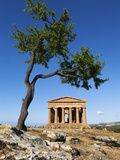 Tempio Di Concordia (Concord) and Almond Tree, Valle Dei Templi, UNESCO World Heritage Site, Agrige Photographic Print by Stuart Black