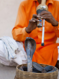 Cobra Snake Charmer Outside the City Palace, Jaipur, Rajasthan, India, Asia Photographic Print by Gavin Hellier