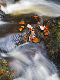 Autumn Leaves in Posforth Gill, Bolton Abbey, Yorkshire, England, United Kingdom, Europe Photographic Print by Mark Sunderland