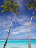 Palm Trees on Tropical Beach, Maldives, Indian Ocean, Asia Fotografisk tryk af Sakis Papadopoulos