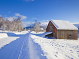 Snow Covered Road, Barn and Chalets in Norwegian Village of Laukslett, Troms, North Norway, Scandin Photographic Print by Neale Clark