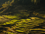 Terraced Rice Fields, Near Pokhara, Gandak, Nepal, Asia Photographic Print by Mark Chivers