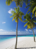 Palm Trees on Beach, Maldives, Indian Ocean, Asia Photographic Print by Sakis Papadopoulos