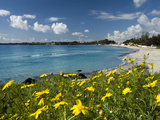 View over Beach in Spring, Fontane Bianche, Near Siracusa, Sicily, Italy, Mediterranean, Europe Fotografisk tryk af Stuart Black